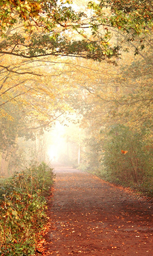 footpath_in_nature-wallpaper-2560x1600.jpg