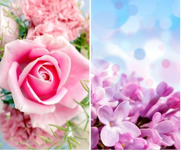 pink_rose_123.jpg